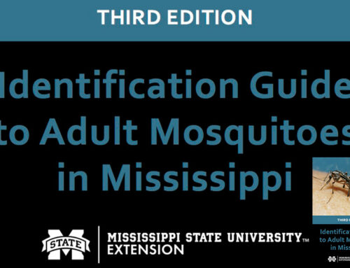 Mississippi State Extension Releases New Identification Guide to Adult Mosquitoes in Mississippi